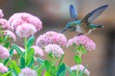 birds 4