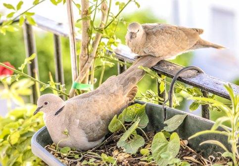 birds 7