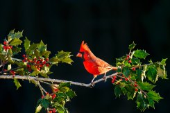 birds 8